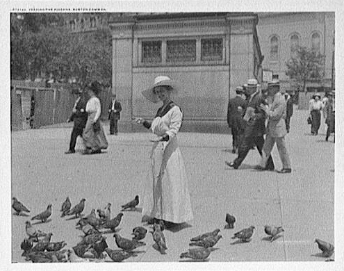 A black and white image of a woman in a dress and hat feeding numerous pigeons in Boston Common.  Several people appear in background.