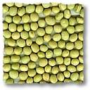 green soybeans 1