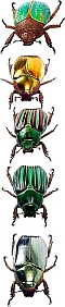 five bugs