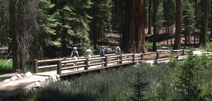 Photo of visitors walking in the Mariposa Grove in Yosemite National Park (Photo by John R. Powell)