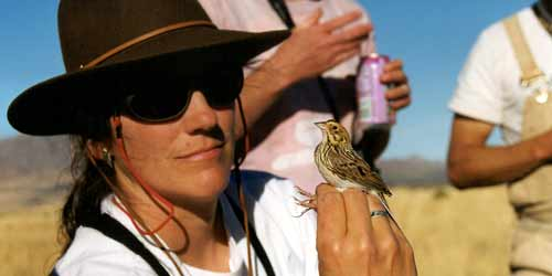 Learn more about the winter sparrow research conducted by Dr. Janet M. Ruth, USGS Fort Collins Science Center.