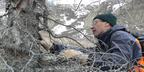 Learn how Meritorious Award recipient Dr. Craig Allen has linked climate change and forest die-off in the U.S. Southwest to forest changes worldwide.