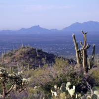 NPScape is working with Saguaro National Park and the NPS Sonoran Desert Inventory and Monitoring Network on a project to evaluate the environmental drivers, natural systems, and conservation context of the Park. NPScape conservation status measures derived from PAD-US have helped Saguaro visualize and understand surrounding land ownership and land management over multiple spatial extents.