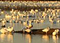 Flocks, Huddles, Schools, & Swarms