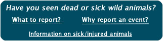 Have you seen dead or sick wild animals?