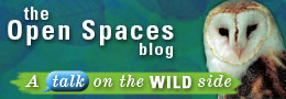 Visit the Open Spaces blog
