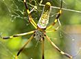 Arachnids & Relatives