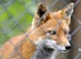 Captive Animals