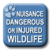 Link to information about or report nuisance, dangerous or injured wildlife