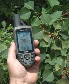 Tallow Tree Collecting GPS Coordinates