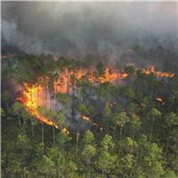 fireline image