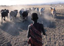 Masai boy 125x90