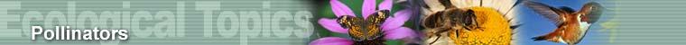Ecological Topics - Pollinators