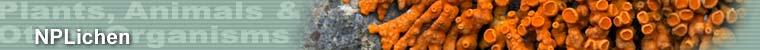 Plants, Animals & Other Organisms - NPLichens