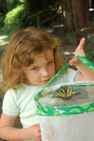 LearningAboutButterflies.jpg