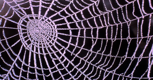 Spider web covered in dew drops. [Photo: William S Keller, U.S. National Park Service]