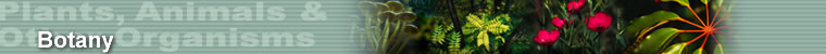Plants, Animals & Other Organisms - Botany
