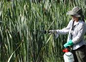 Invasive species management.  [Image: U.S. National Park Service]