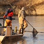 Operation Silverstream, Asian Carp Rapid Response Workgroup December 2, 2009.