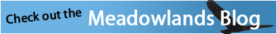 Meadow blog