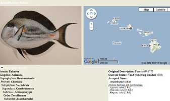 PBIN Taxonomic Service Screenshot