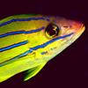 Invasive fish thumbnail