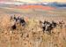 South--Central Semi-Arid Prairies, USFS