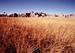 West-Central Semi-Arid Prairies, NPS