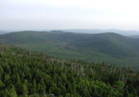 Forested area along the Appalachian Trail