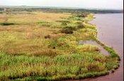Image of the Texas-Louisiana Coastal Plain, courtesy of National Resources Conservation Service