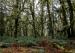 Marine West Coast Forest, NPS