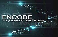ENCODE Encyclopedia Of DNA Elements