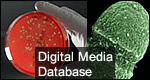 Digital Media Database