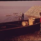Photo: DOCUMERICA original caption: Bluffton Oyster Co-op, 05/1973 Paul Conklin (1929-2003).  This family run operation began in 1899 and still exists today! Who has a photo to compare the change since 1973? http://www.flickr.com/groups/ourenvironment/?  This photo is one of three highlighting Documerica scenes from South Carolina. Follow the traveling exhibit this month with U. S. Environmental Protection Agency Region 4 (Southeast Region) @ http://bit.ly/DocumericaExhibitGA