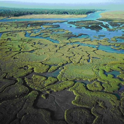 """Photo: It's Estuary Wednesday at NOAA! Here's a great photo of the Guana Tolomato Matanzas National Estuarine Research Reserve in Florida. It encompasses approximately 73,352 acres of salt marsh and mangrove tidal wetlands, oyster bars, estuarine lagoons, upland habitat and offshore seas in Northeast Florida. The GTM Reserve is located in the East Florida subregion, south of Jacksonville and sandwiching St. Augustine. It contains the northernmost extent of mangrove habitat on the East Coast of the United States, some of the highest dunes in Florida, measuring 30-40 feet, and one of the few remaining """"inlets"""" in northeast Florida not protected by a jetty. Thus, the estuary presents an easy study of what an inlet might have looked like in the past. The coastal waters of the GTM Reserve are also important calving grounds for the endangered right whale. Learn more about NOAA's National Estuarine Research Reserves at: http://www.nerrs.noaa.gov."""