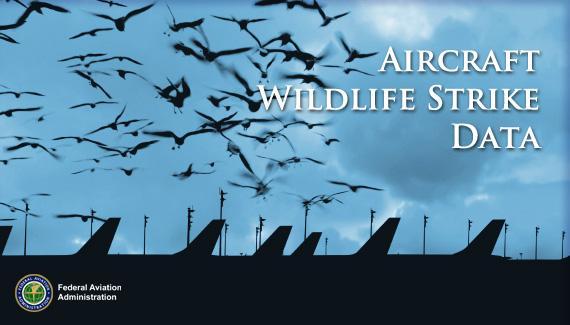 Aircraft Wildlife Strike Data