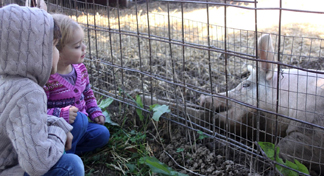 Two children are watching a pig at the Fair.