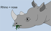 Picture of a rhinoceros