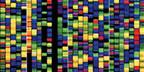 Colorful representation of DNA building blocks