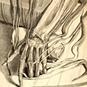 Dream Anatomy exhibition: Ontleding des menschelyken lichaams... Amsterdam, 1690. Copperplate engraving with etching. Govard Bidloo