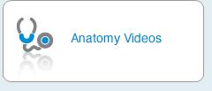 Anatomy Videos