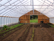 high tunnel at wellington herbs and spices with rows of newly sown herbs