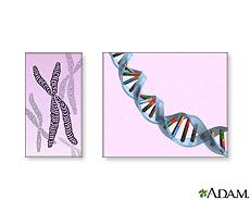 Ilustración de cromosomas y ADN