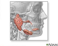 Ilustración de las glándulas salivales