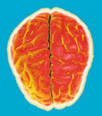 Fotografía de un cerebro estilizado