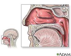 Ilustración de anatomía nasal