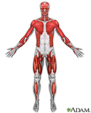 Illustration of the muscles
