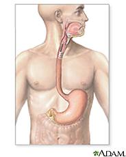 Ilustración del sistema gastrointestinal superior