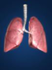 Illustration of 3d lungs.