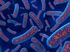 image of illustration of bacteria